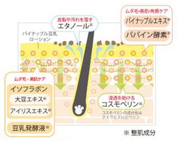 鈴木ハーブ研究所のパイナップル豆乳ローションが効果を出す仕組み